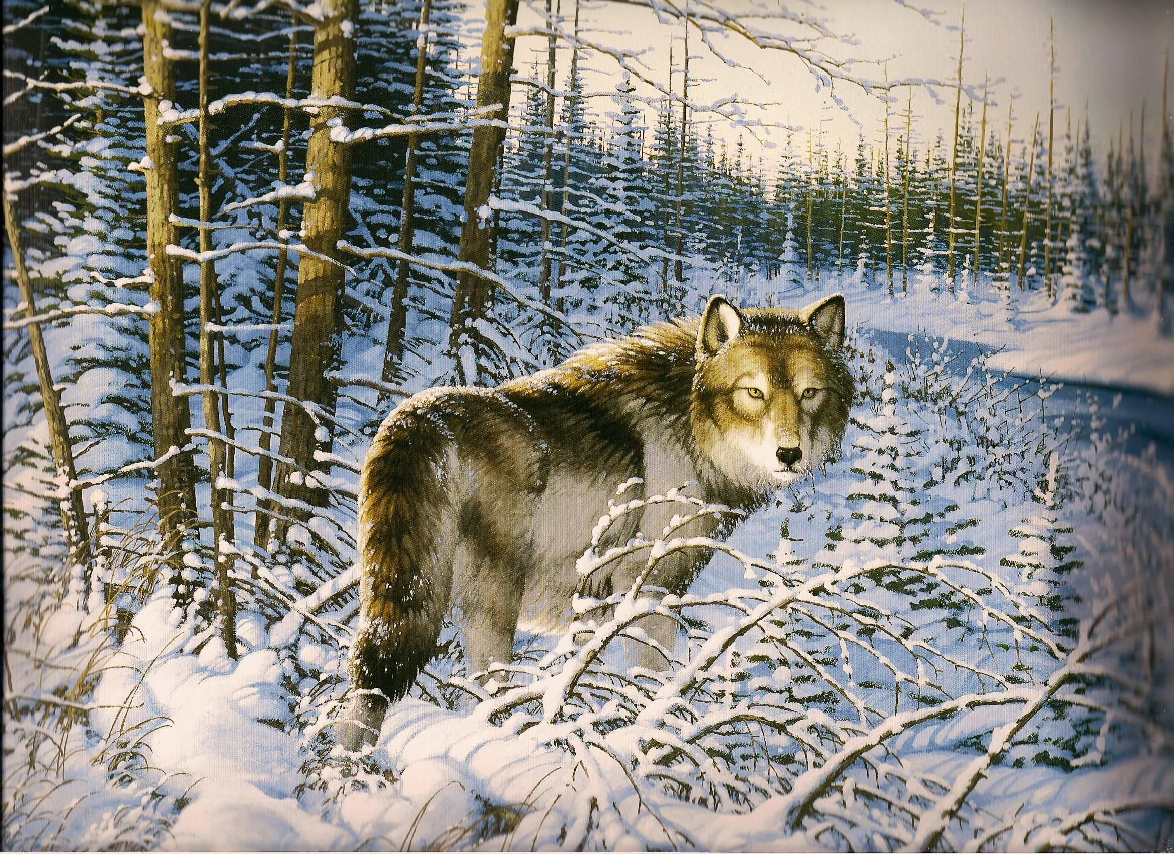 Spirit Animal Wallpapers Wallpaper Cave - Wallpaperzen org