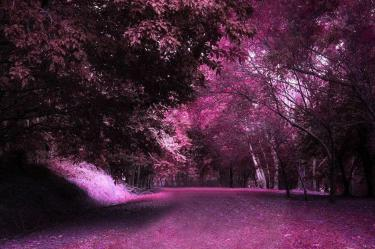 forest enchanted deviantart backgrounds fantasy cathleentarawhiti cave wallpapercave