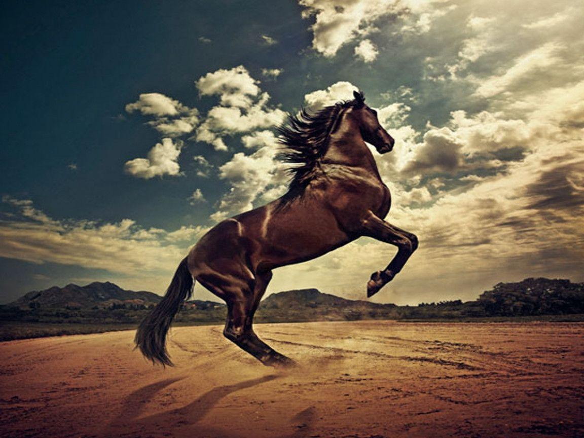 Beautiful Wild Animals Wallpapers Wild Horses Wallpapers Wallpaper Cave
