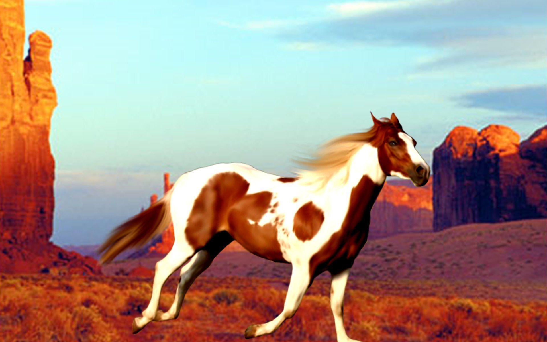 Paint Horse Wallpapers