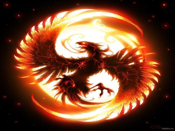 Cool Fire Dragon Desktop Backgrounds