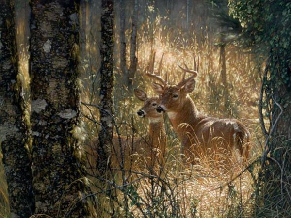 Deer Hunting Desktop Backgrounds Fall