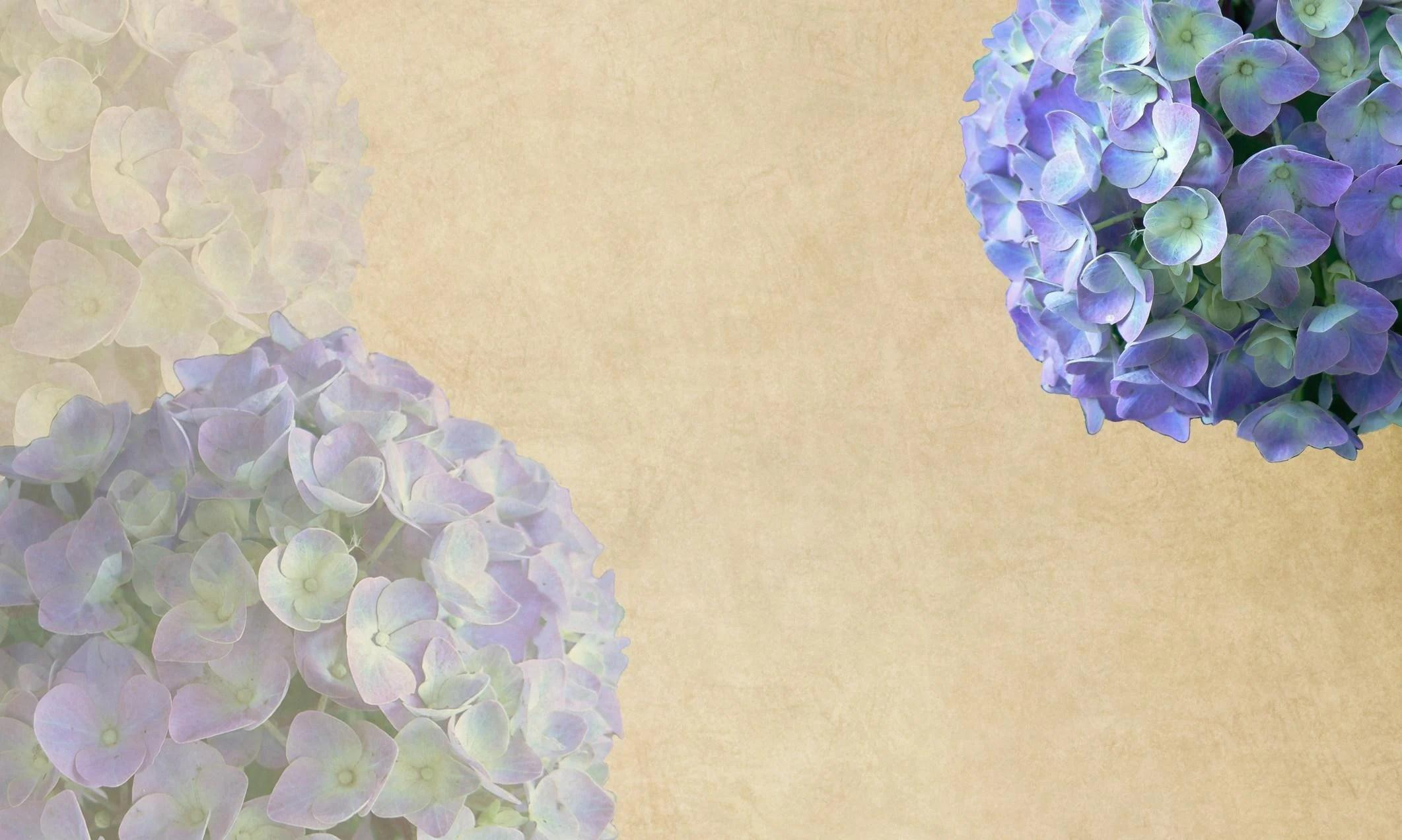Anime Wallpaper 2014 Hydrangea Backgrounds Wallpaper Cave