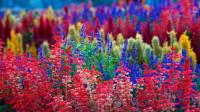 Colorful Flower Wallpapers