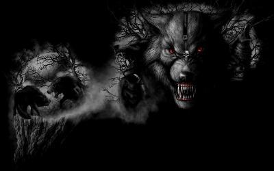 dark hd wolf wallpapers desktop amoled widescreen