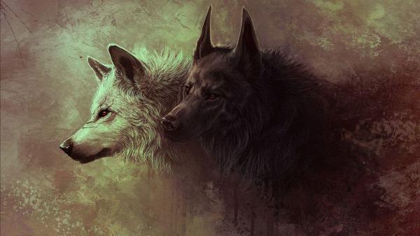 White Wolf Desktop Wallpaper