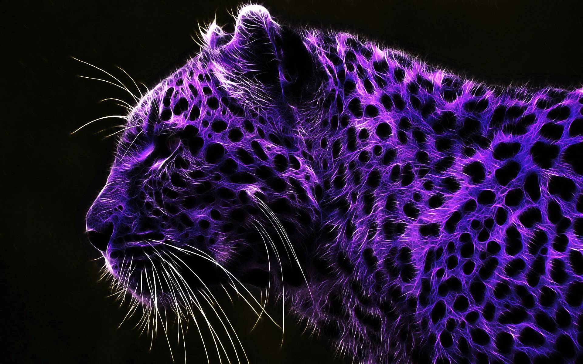 Neon Animal Print Wallpaper Purple Hd Wallpapers Wallpaper Cave