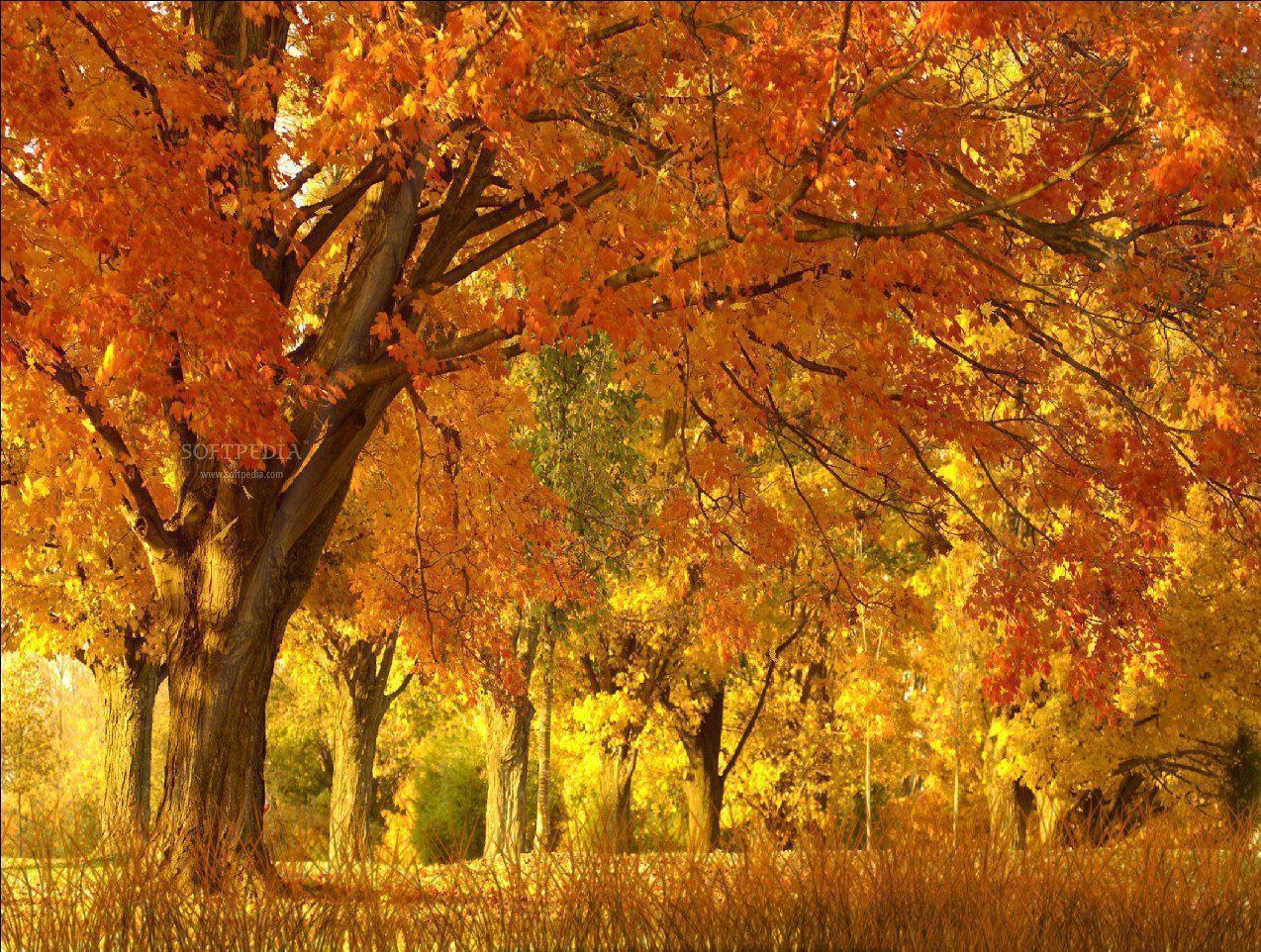 Falling Leaves Animated Wallpaper Fall Season Backgrounds Wallpaper Cave