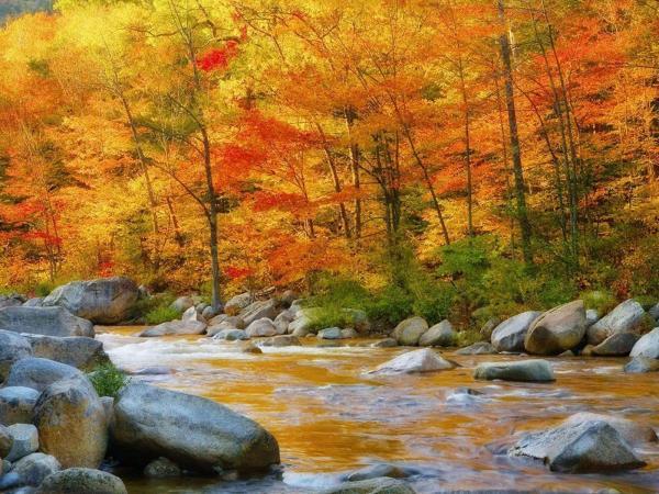 Fall Autumn Desktop 1920X1080