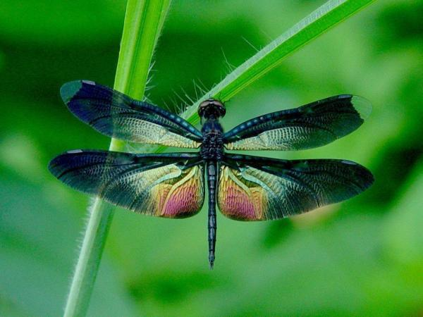 Beautiful Colorful Dragonfly