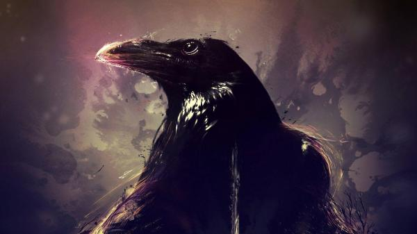 Crow Wallpapers - Wallpaper Cave