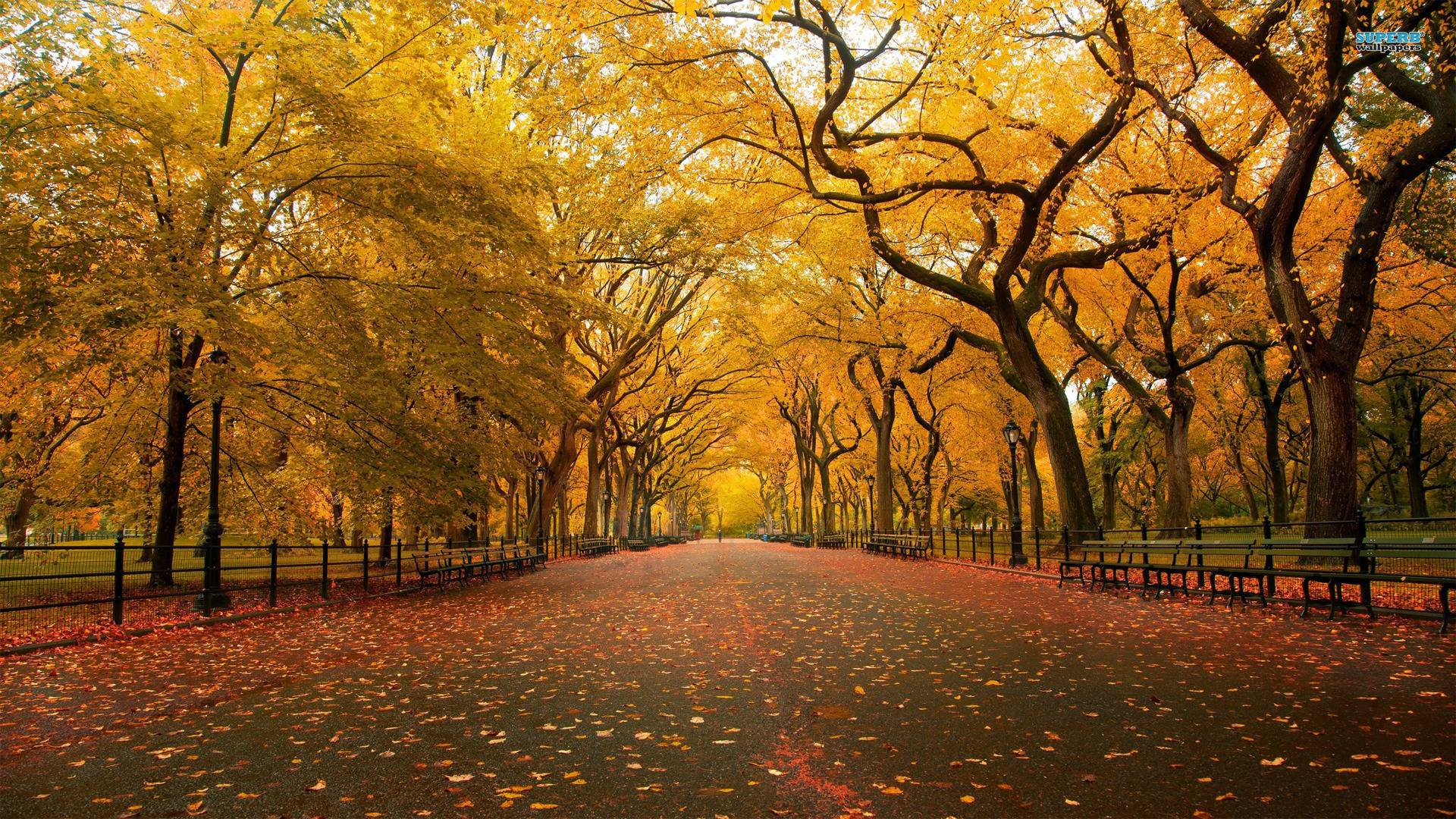 4k Central Park In The Fall Wallpaper Fall Landscape Wallpapers Wallpaper Cave
