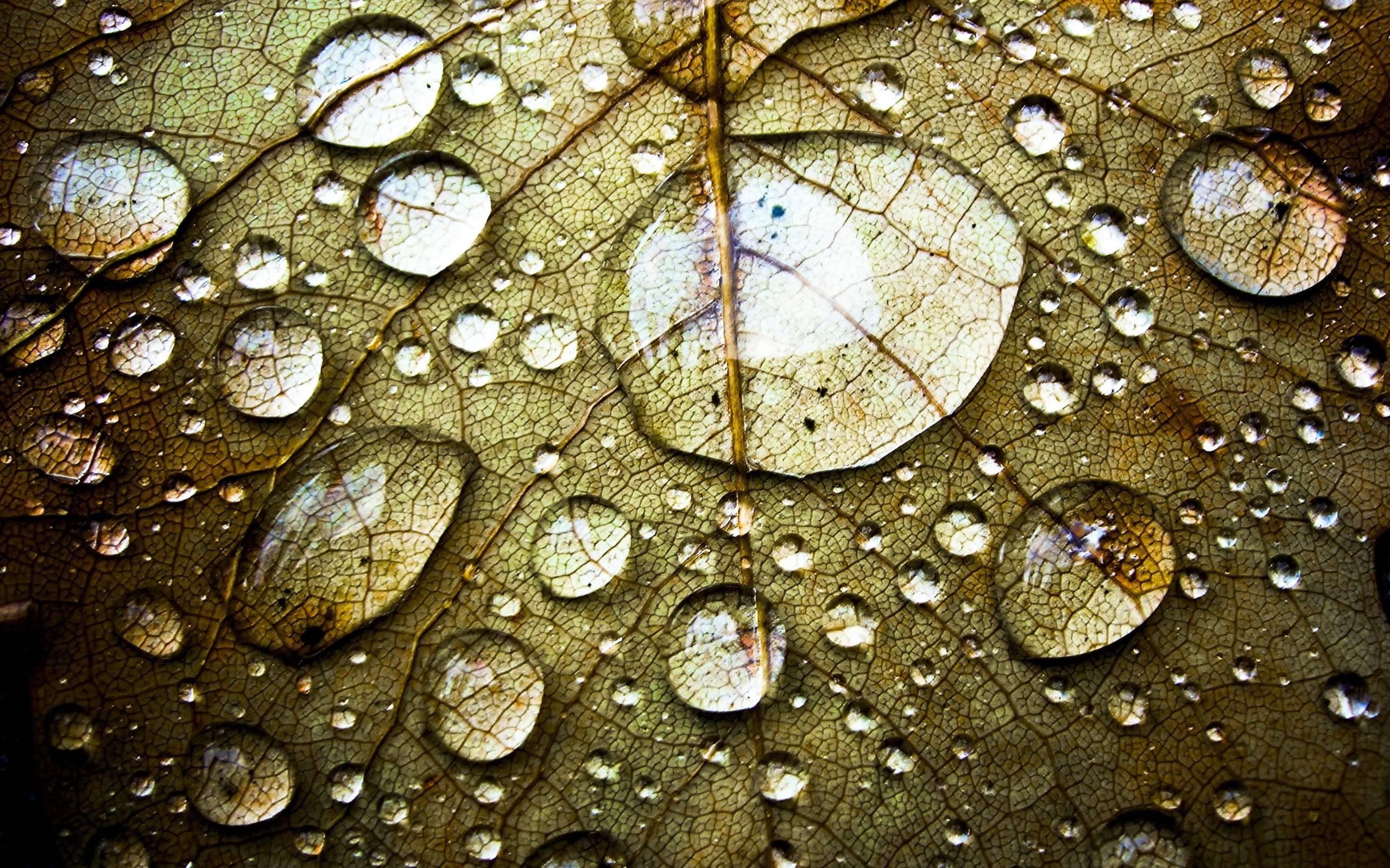 Water Drop Hd Wallpapers  Wallpaper Cave