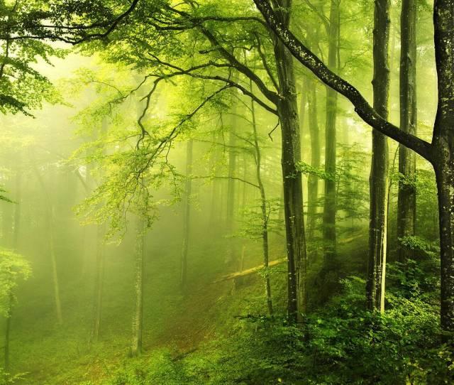 Forest Wallpaper Hd
