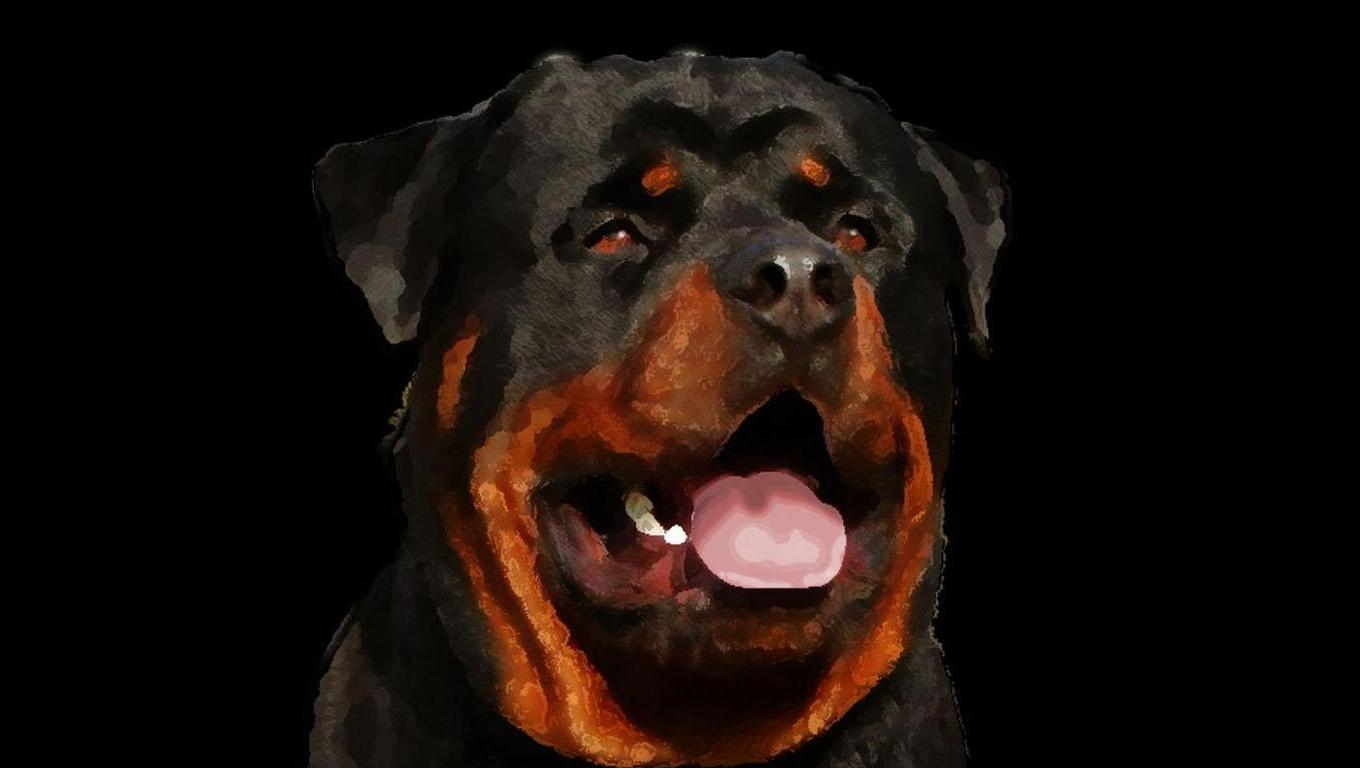 Awesome Animal Wallpapers Rotweiler Wallpapers Wallpaper Cave