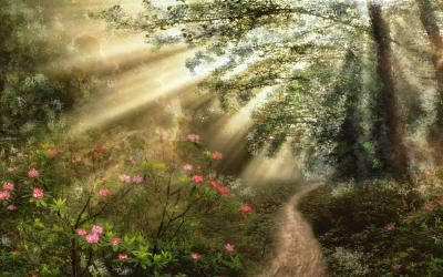 forest fantasy wallpapers backgrounds hd 4k background magical ultra shining sun flowers wall stars
