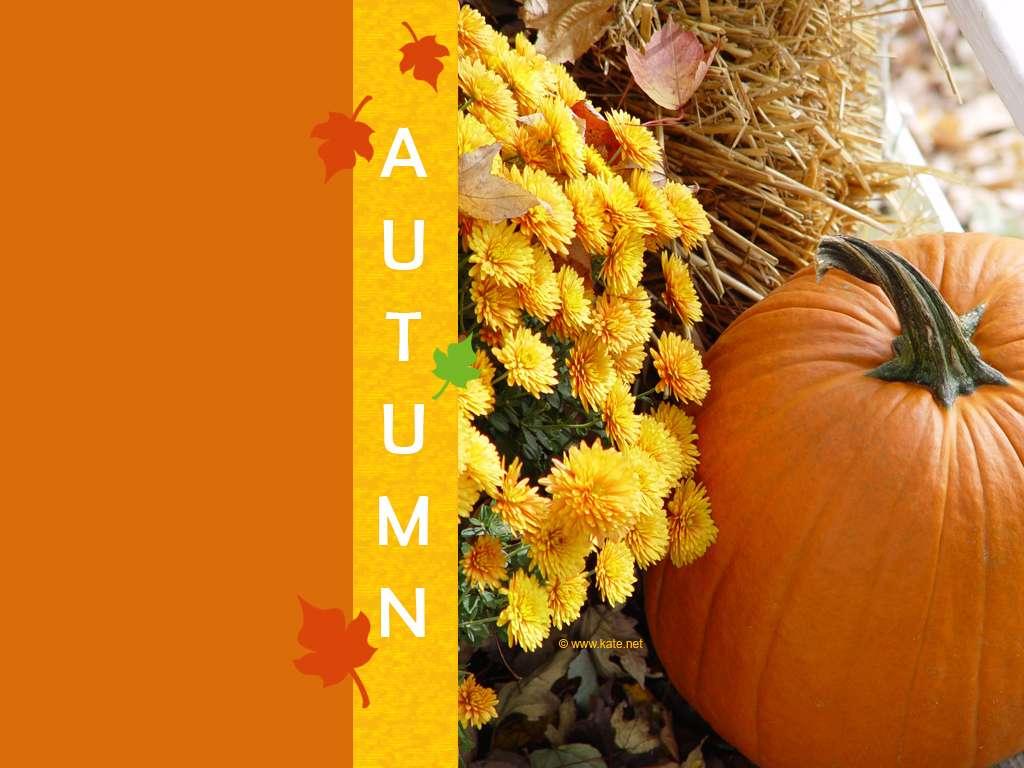 Fall Desktop Wallpaper With Pumpkins Fall Pumpkin Wallpapers Wallpaper Cave