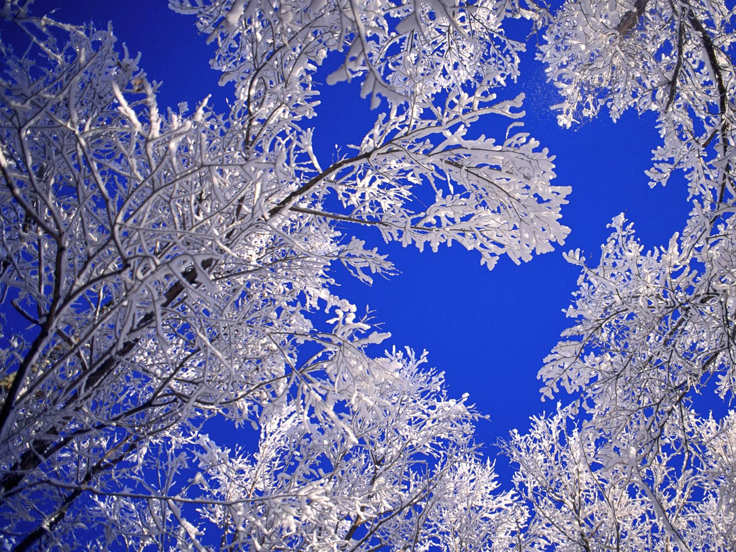 Free Desktop Wallpapers Winter Scenes Wallpaper Cave