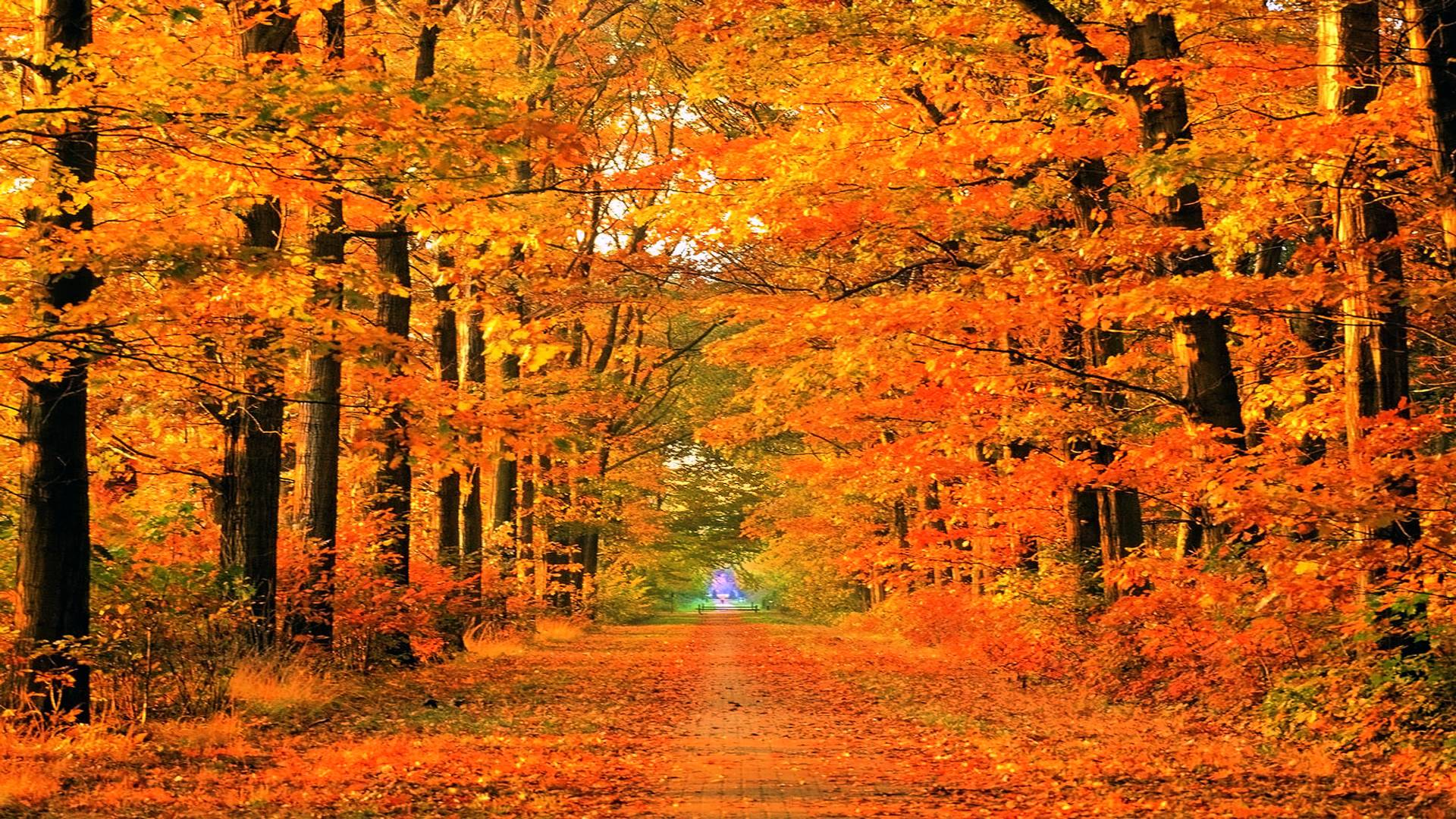 Free Fall Season Wallpapers Fall Backgrounds For Computer Wallpaper Cave