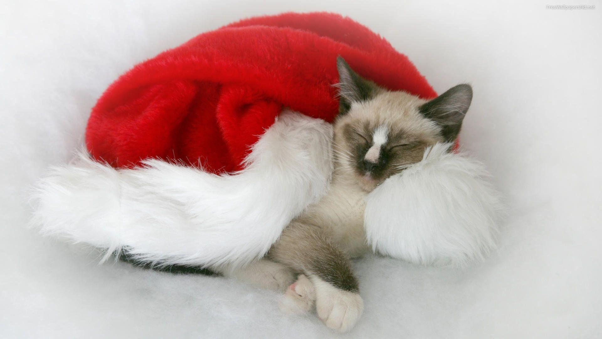 Christmas Cat Wallpapers Wallpaper Cave