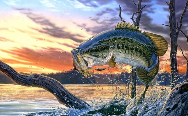 Largemouth Bass Backgrounds Wallpaper Cave