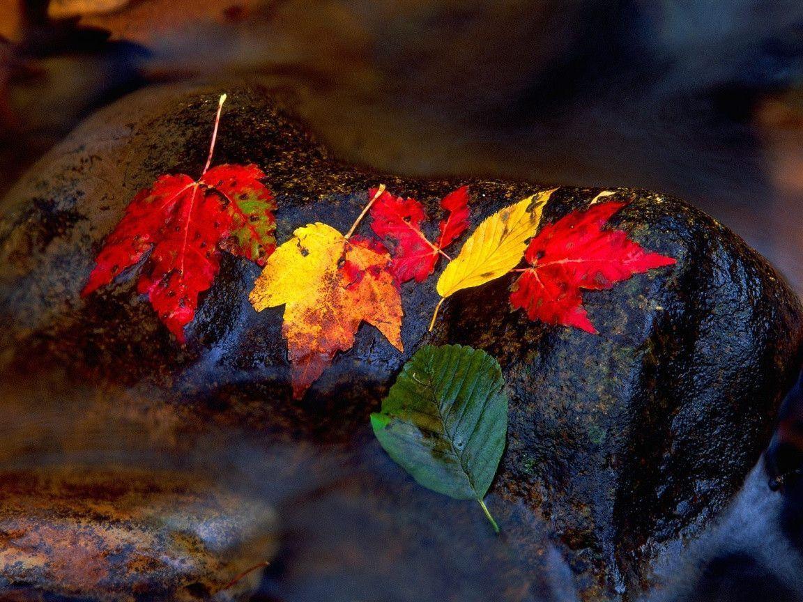 Computer Wallpaper Fall Leaves Fall Colors Wallpaper Backgrounds Wallpaper Cave