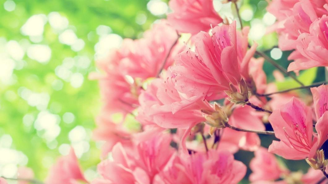 Spring flowers wallpaper bestpicture1 spring flowers backgrounds desktop wallpaper cave mightylinksfo