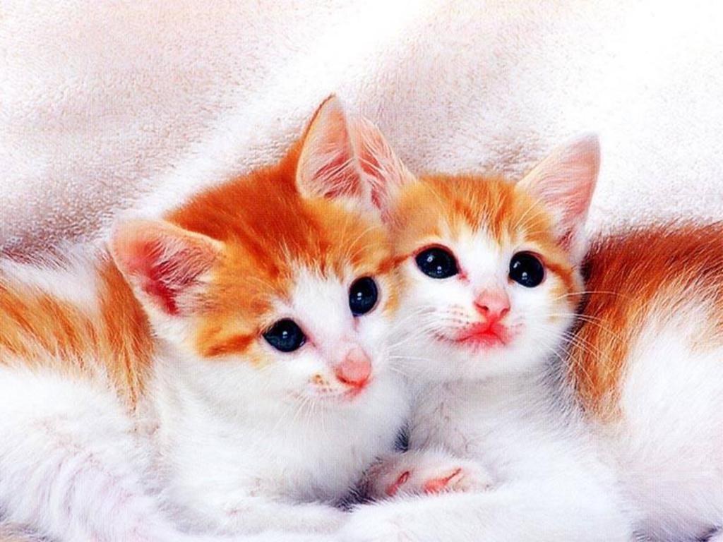 cute cats wallpapers - wallpaper cave