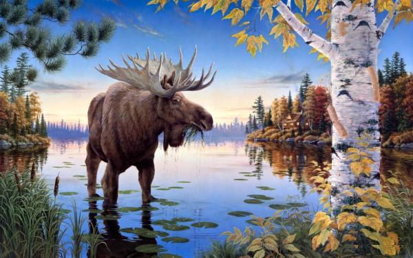 Moose Fall Desktop Wallpaper