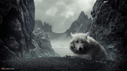 Dark Wolf Wallpapers Wallpaper Cave
