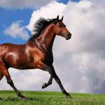 Arabian Horse Wallpapers Wallpaper Cave