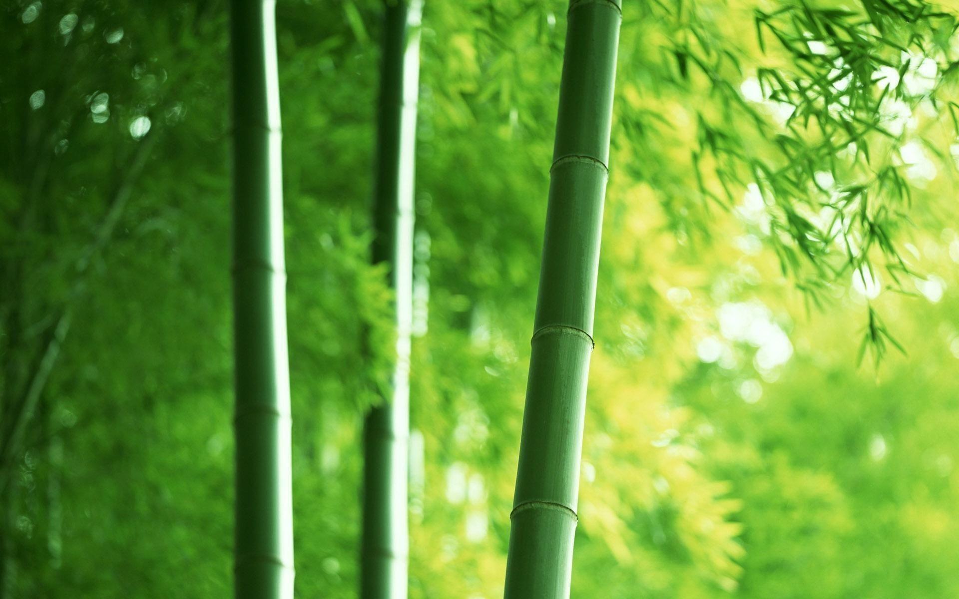 bamboo desktop wallpapers wallpaper