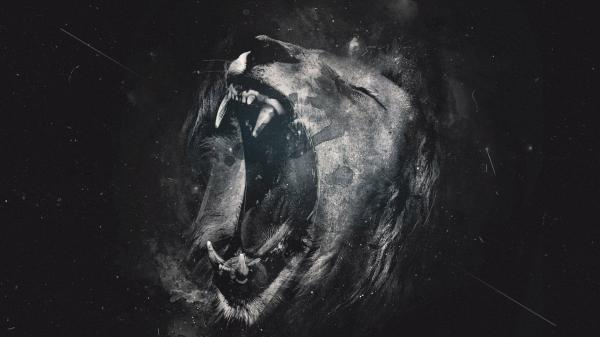 20 Black Lion Wallpaper Art Pictures And Ideas On Meta Networks