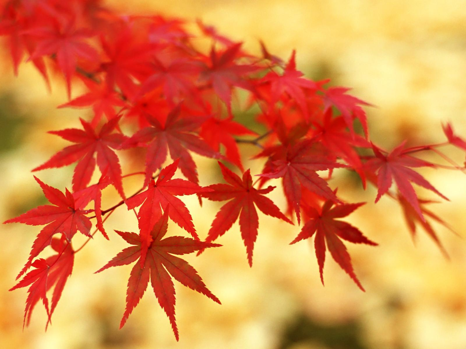 Awesome Fall Wallpapers Red Leaves Wallpapers Wallpaper Cave