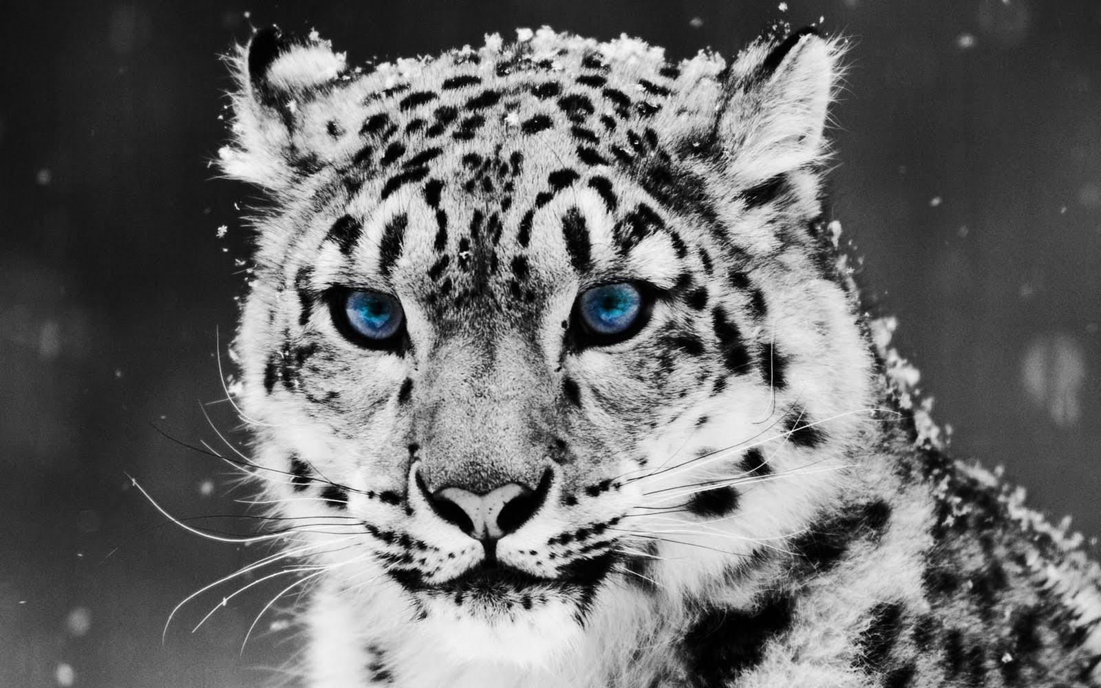 Lord Shiva Black Hd Wallpapers Download Baby Snow Leopard Wallpaper Gallery