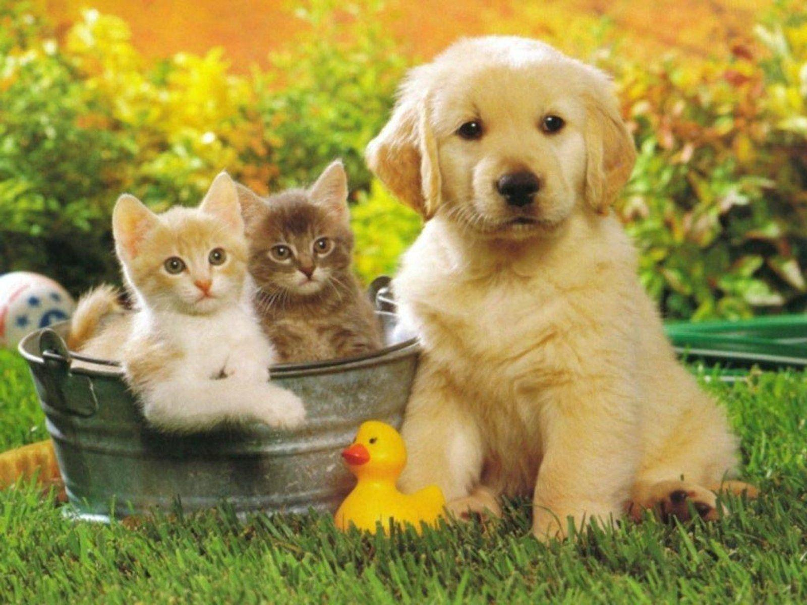 Puppies And Kittens Wallpapers Wallpaper Cave
