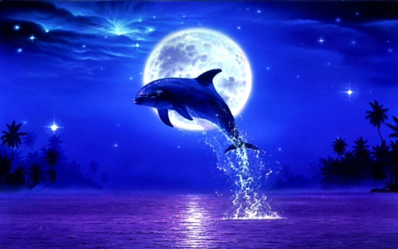Cute Baby Dolphin Wallpaper Cute Dolphin Wallpapers Wallpaper Cave