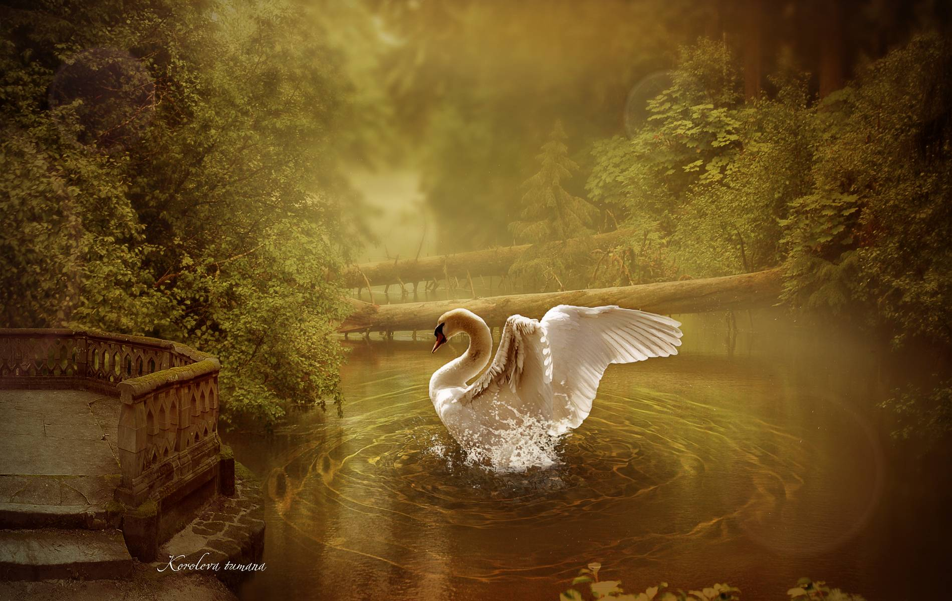 Zedge Full Hd Wallpaper Swan Wallpapers Wallpaper Cave
