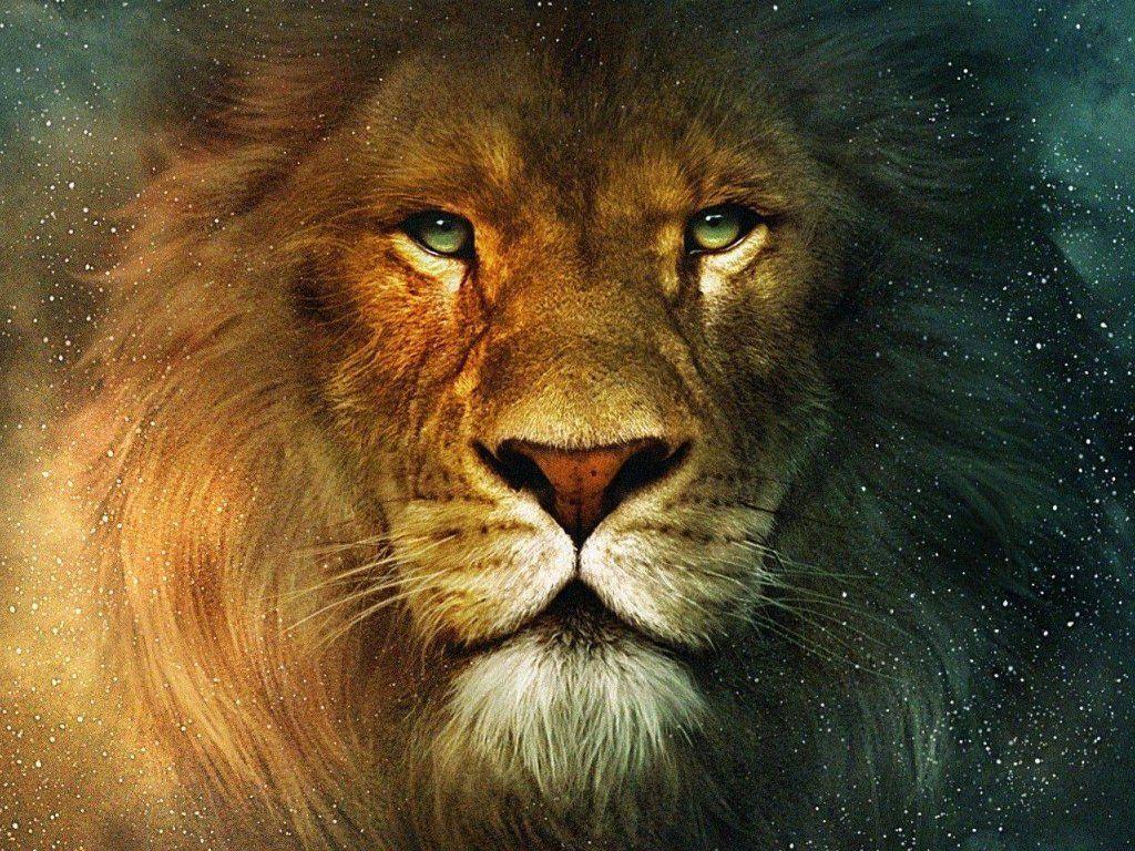 lion face wallpapers wallpaper
