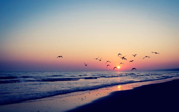 Bird Silhouette Sunset