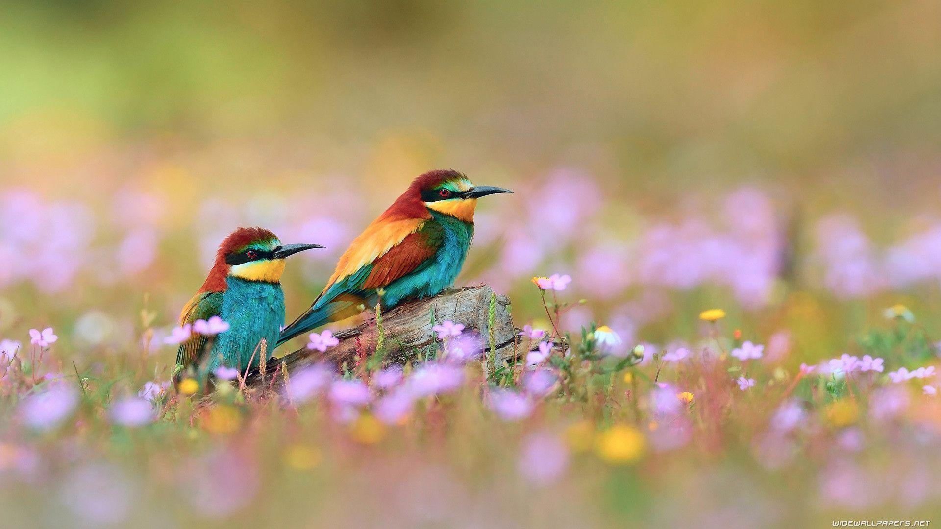 birds wallpapers wallpaper cave