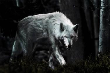 Wallpaper Dark Wolf