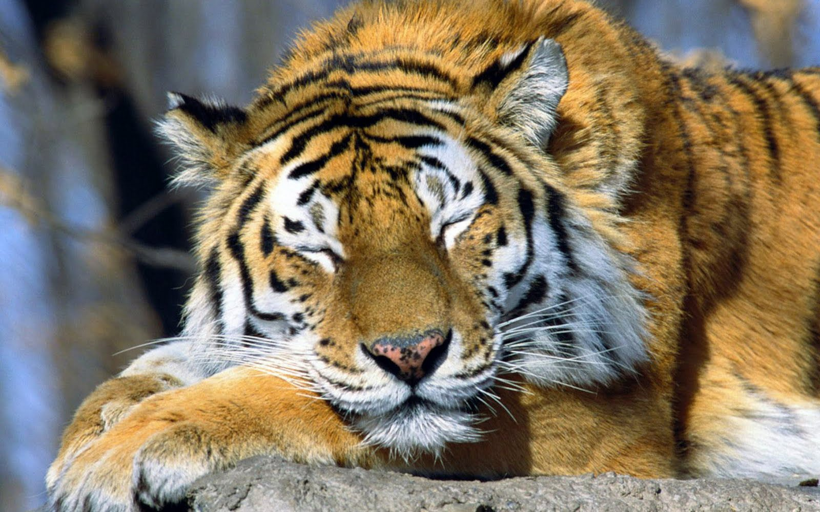 cool animal backgrounds wallpaper