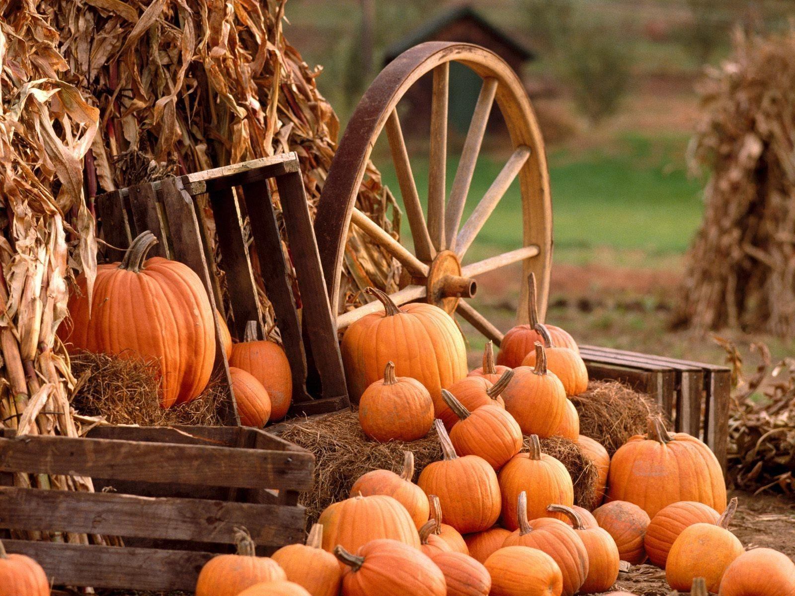 Fall Scarecrow Wallpaper Fall Harvest Wallpapers Wallpaper Cave