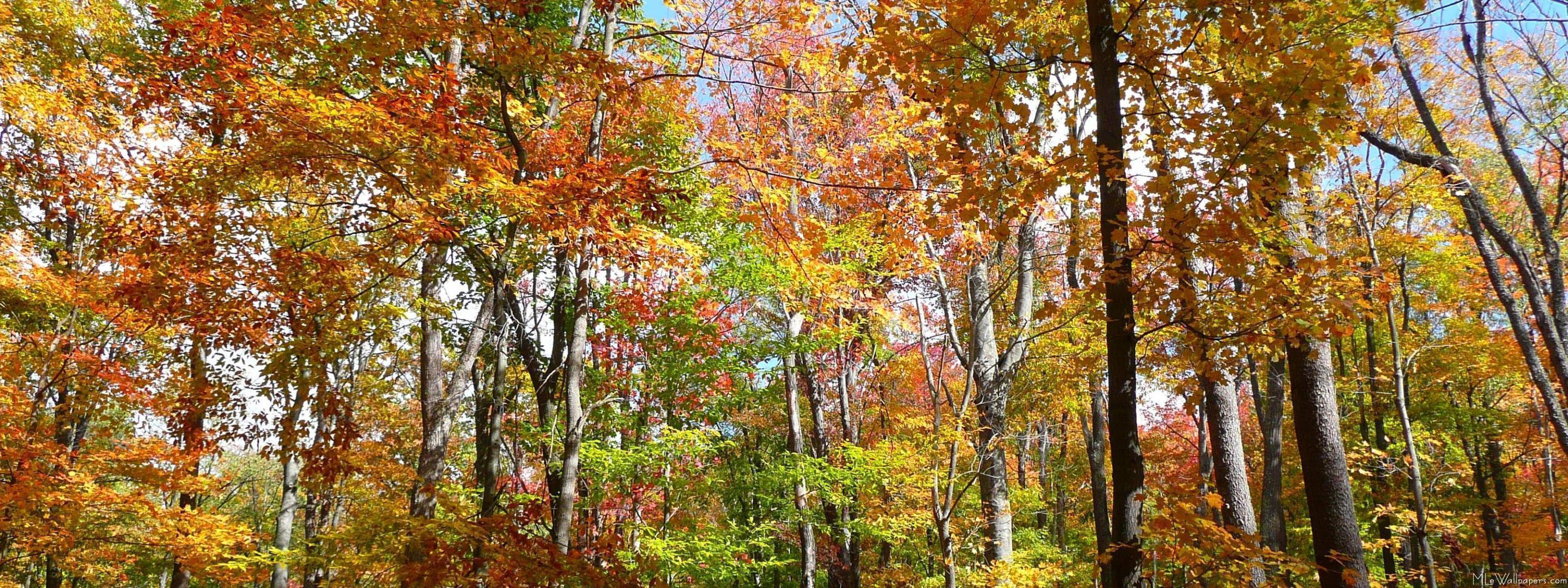 Free Fall Flower Desktop Wallpaper Autumn Screen Wallpapers Wallpaper Cave