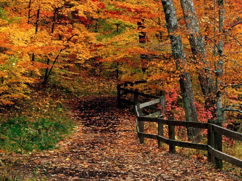 Beautiful Fall Pictures Wallpaper Free Desktop Wallpapers Fall Scenes Wallpaper Cave