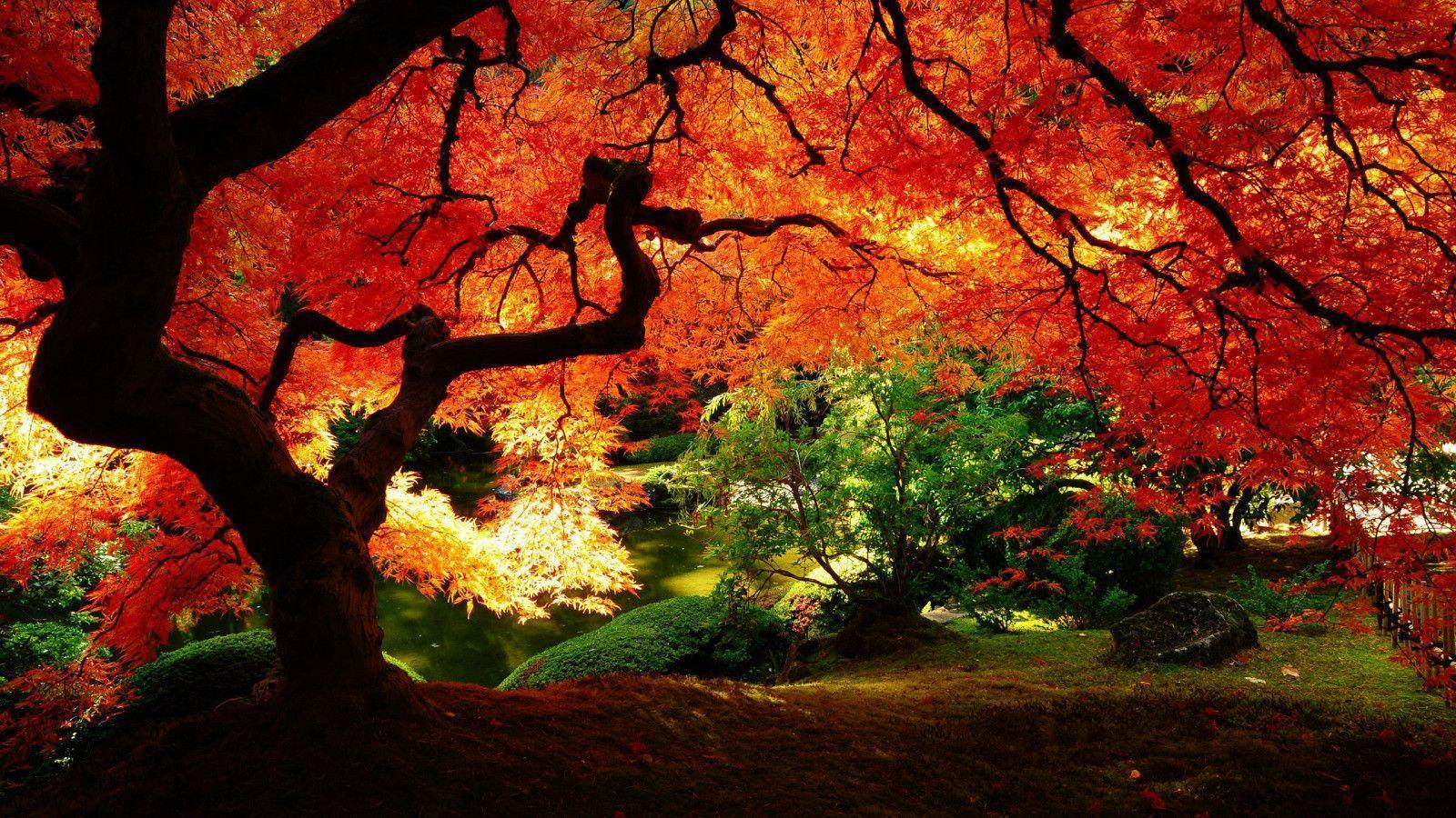 Awesome Fall Wallpapers Fall Thanksgiving Wallpapers Wallpaper Cave