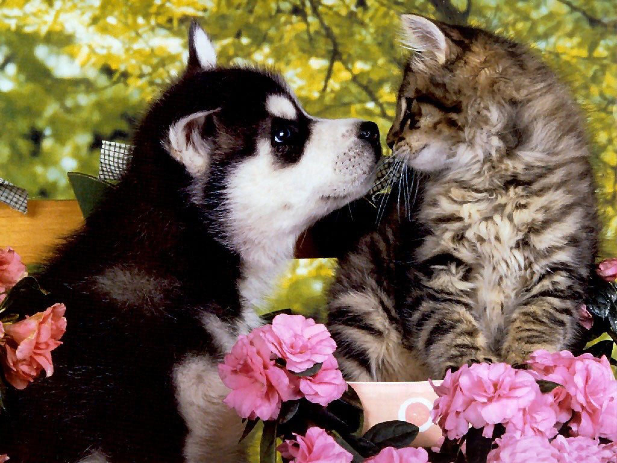 puppies and kittens wallpapers