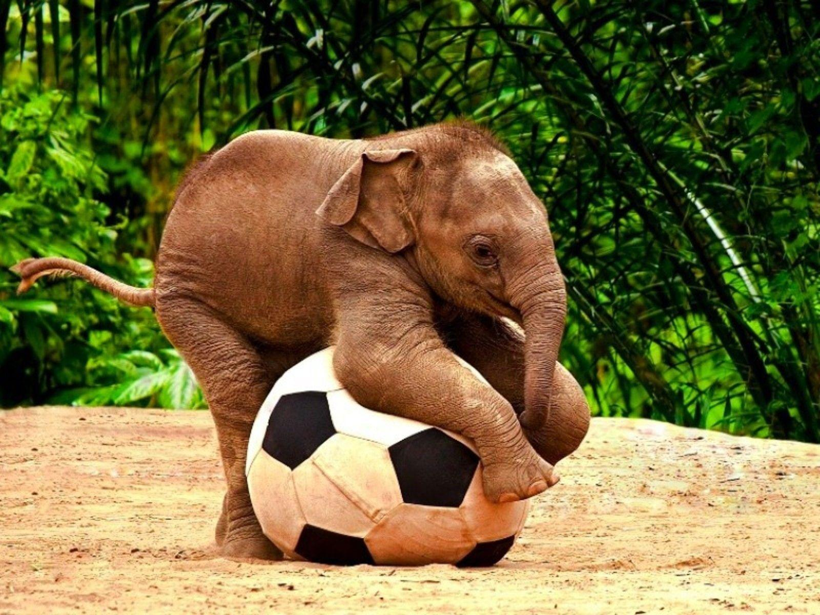 Cute Fat Baby Wallpapers Baby Elephant Wallpapers Wallpaper Cave