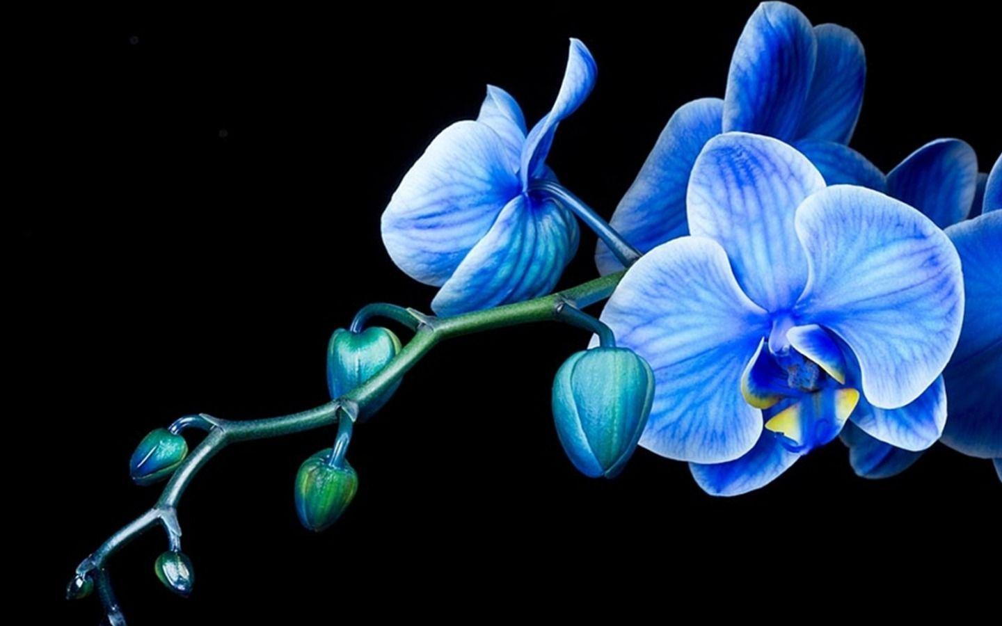 Orchid Wallpapers  Wallpaper Cave